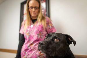 Yvonne Rafferty, RN, with her service dog